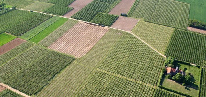 El sector agroalimentario y el Brexit: Algunas reflexiones iniciales.