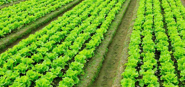 ¿Nuevos vientos para una política agroalimentaria?
